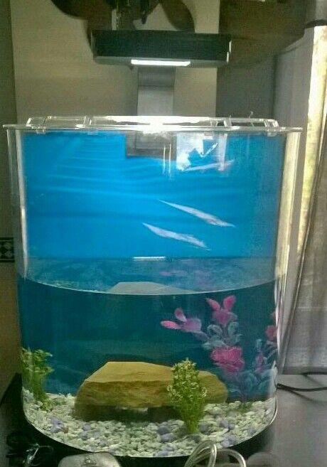 Tetra Aqua Art fish tank 30 litres