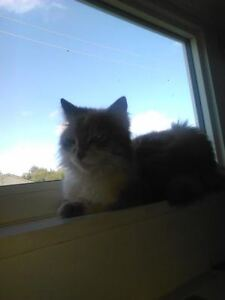 FREE - Abandoned sweet kitty needs home, please help her!