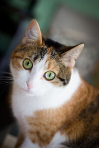 Missing kitty named Callie-missing 2 months