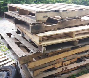 Free Pallets ( 12+ of them)