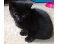 Cute black kittens 🐱