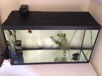110 litres aquarium with filter and heater (3 gold fish for free)