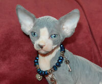 **CHATTERIE NEPHTYS SPHYNX**