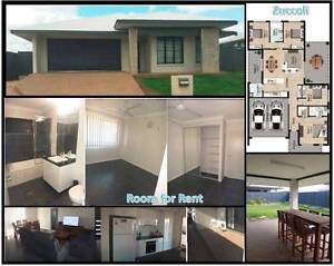 Looking for an amazing housemate!! Room for rent in Zuccoli Palmerston Area Preview