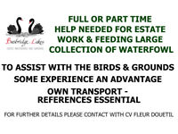 Full or part time help needed for estate work & feeding large collection of waterfowl