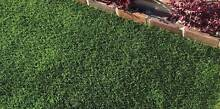 SYNTHETIC/FAKE GRASS - Premium Synthetic Lawn Installations East Ryde Ryde Area Preview