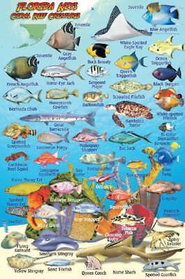 Florida Keys Reef Creatures Guide Waterproof Fish Identification Card 4