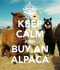 Alpacas for sale Herne Hill Swan Area Preview