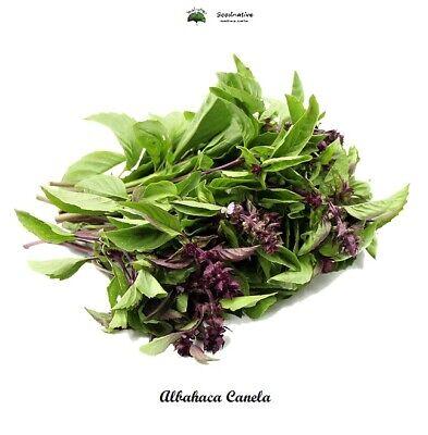 Ocimum basilicum - Albahaca Canela - 500 semillas - Saatgut - Graines...