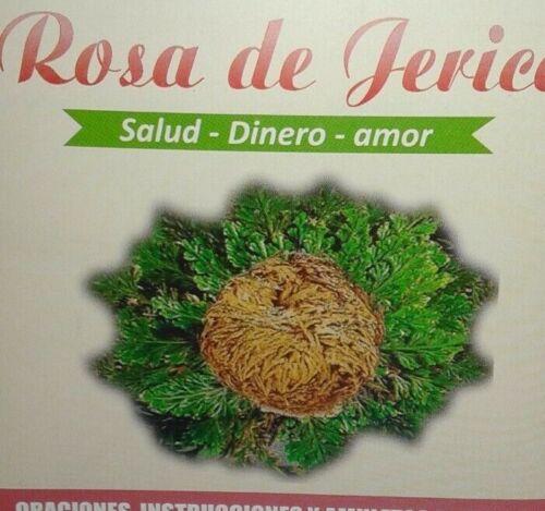 ROSA DE JERICO CONOSIDA COMO LA PLANTA QUE PROVEE SALUD, DINERO Y AMOR
