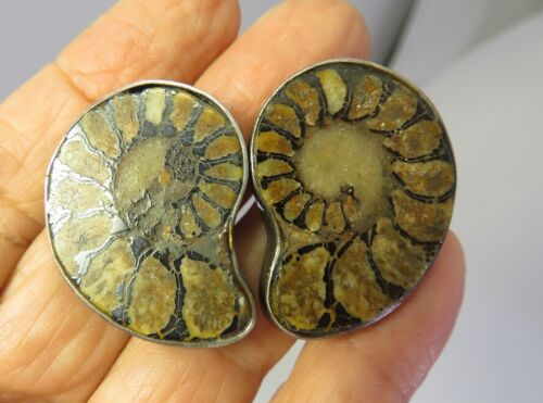 VINTAGE GENUINE ANCIENT FOSSILIZED NAUTILUS SHELL EARRINGS STERLING BACKS MEXICO