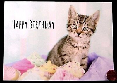 Grey Kitten Cat Kitty Cupcakes Dessert Cute   Happy Birthday Greeting Card   New