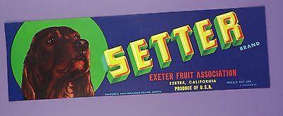 c1950s, Original Setter Unused Fruit Crate Label - Red Setter/ Irish Setter
