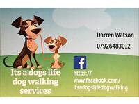 Dog walking / dog walker