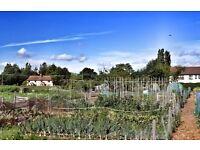 Allotment to Rent, Bressingham, Norfolk