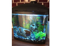 64 litre fish tank aquarium. warm water with fish and extras