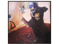 Free dog walker/ pet sitter