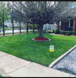 Yellow Cedar Landscaping / Mulch / Sod / interlock stone