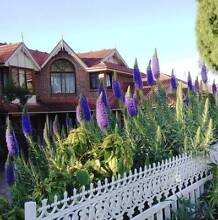 Pride of Madeira Plant Eastwood Ryde Area Preview