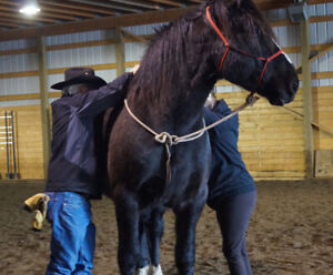 Equine Assisted Personal Development Coach