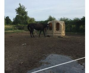 16 Year old registered QH / Jument 16 ans Enregistre QH