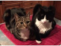 Two cats (brother & sister) need a new home - can you help?