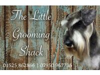 Experienced Dog Groomer Wanted