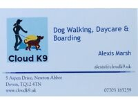 Reliable, fit, enthusiastic dog walker/sitter available covering Newton Abbot & surrounding areas