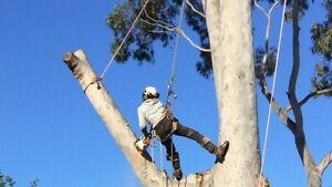 Extreme tree lopping services Macquarie Park Ryde Area Preview