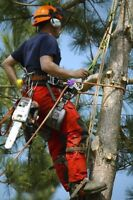 **TREE BOSS** Tree Removal / Fall Clean-Up