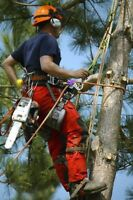 **TREE BOSS** Tree Removal / Trimming