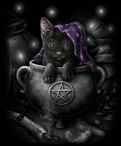 Black Cat/Kitten