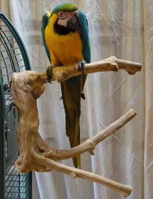 Parrot Pet Bird Perch Cage Mount Large Multi Branch Java Wood Extra Large