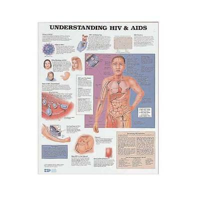Understanding Hiv Aids Anatomy Poster Anatomical Chart Company