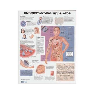 Understanding Hiv Aids Anatomy Poster Anatomical Chart Company