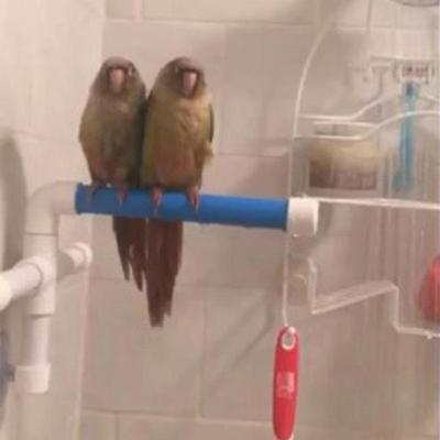 Parrot Pet Bird Wall Suction Cup Toys Paw Grinding Stand Shower Perches Budgie D