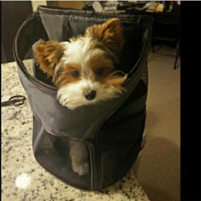 Pet Dog Cat Puppy Carrier Mesh Comfort Travel Tote Shoulder Bag Backpack HS3