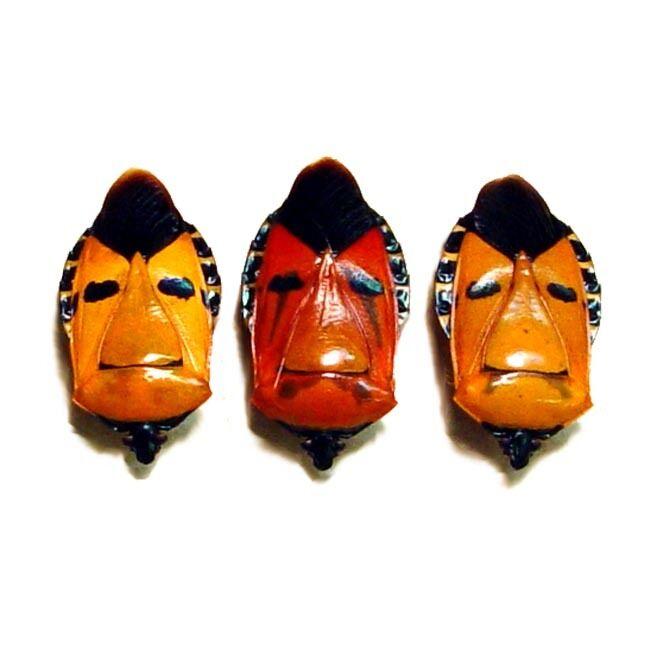 Real Framed Catacanthus Incarnatus Set of 3 Man Face Beetle 2220S