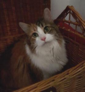 Charlotte. Affectionate, Declawed, Senior Cat Needs Loving Home