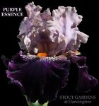purple_essence95