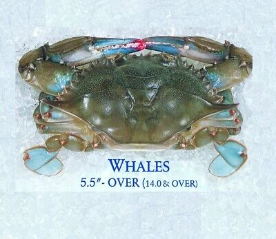 (2 lbs) Frozen Lump Crab Meat-  (6) MD SS Crabs Whales  5 1/2 in + [FROZEN]  Frozen Crab Meat