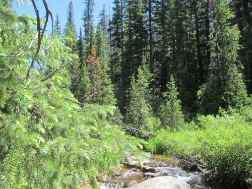 Colorado Placer Mine Gold Creek Mining Claim Creek Silver Panning Sluice
