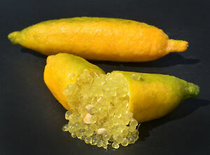 1 NEW SEASON YELLOW SUNSHINE FINGER LIME PLANT: FOR COLLECTORS! GREAT PLANT