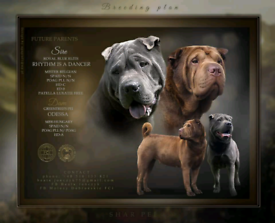 SHAR PEI PERFECT BLOOD
