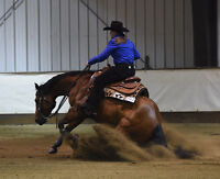 Reining Lessons on a Quality Show Horse