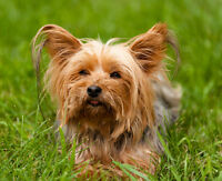 Doggy Day/Evening Care ` Friendly small dogs are welcome!