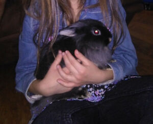 2 sisters netherland /lionhead bunny for rehoming