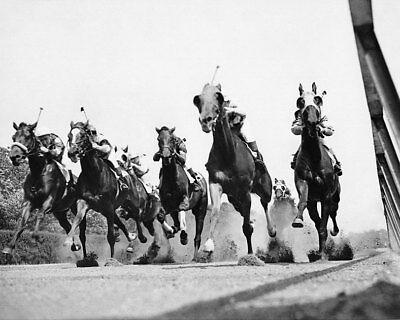THOROUGHBRED HORSE RACE AT BELMONT TRACK 8x10 SILVER HALIDE PHOTO PRINT