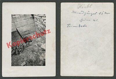 orig. Foto Hiebl Trimbach Elsass Fliegerbombe Blindgänger 15 cm Kampfmittel 1940