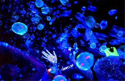 Tekno TB350B Glowing Bubble Fluid-Blue (Half Gal) Bubble Machine Fluid - New